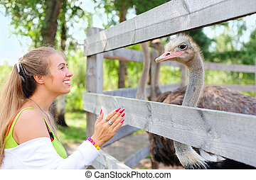 Girl communicating to an ostrich - Tourist communicating to...