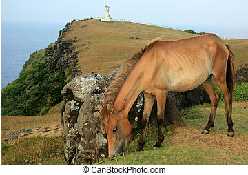 Horse + Lighthouse - Yonaguni Island, Okinawa, Japan