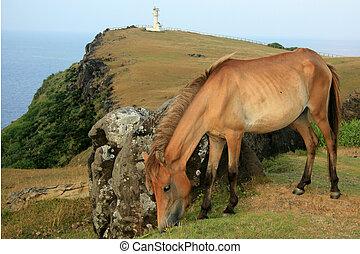 Horse + Lighthouse - Yonaguni Island, Okinawa, Japan