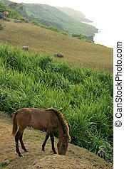 Horse - Yonaguni Island, Okinawa, Japan