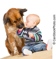 Dog licking a cute baby - Faithful family dog gently licking...