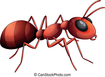 An ant - Illustration of an ant on a white background