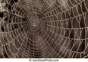 Cobweb with dew drops. Can be used as background