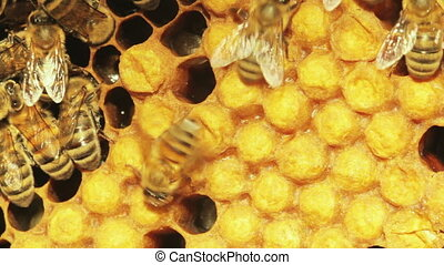 Close-up view of bees in honeycombs.
