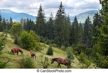 Horses on mountainside. - Horses group on green mountainside...