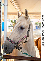 horse - Light-colored horse