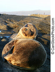Baby Sea Lion resting on the beach