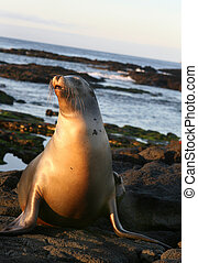Sea Lion - This Sea Lion is ready for a swim in the cool...