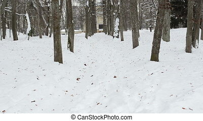 man walk path snow winter - man walk on winter park lime...
