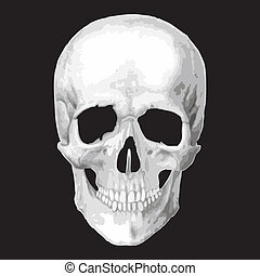 Human skull model Vector object scull illustration People...