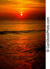 kattöga, solnedgång,  ocean