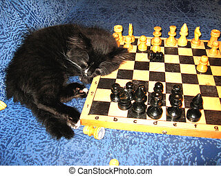 The cat sleeps on a chess - The tired cat-champion sleeps on...