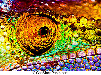 Reptilian eye - Photo of colorful reptilian eye, closeup...