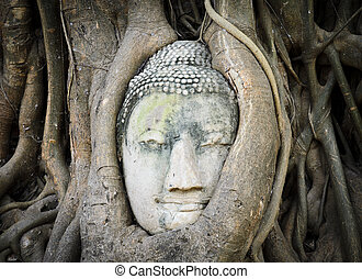 Head of Buddha in a tree trunk, Wat Mahathat,...