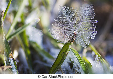 Ice crystal on a grass in the early spring