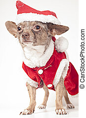 Christmas dog - Xmas winter small dog outfit on a white...
