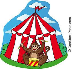 circo, scimmia, tenda