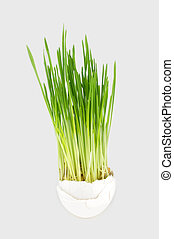 wheat grass - Food & Drink Arrow Drinks Arrow Other