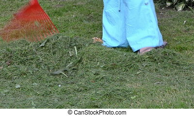 woman rake grass lawn - woman in blue pant rake freshly cut...