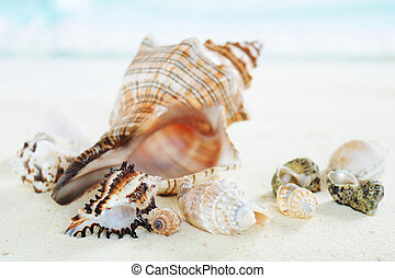 sea shell - several sea shells on the  sand  background