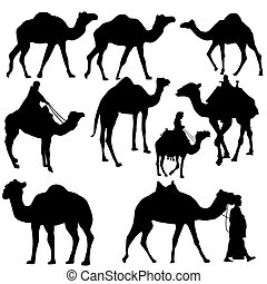 Set of camels silhouettes on white background, vector...
