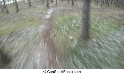 Sport and nature - Cycling through the forest on a winter...
