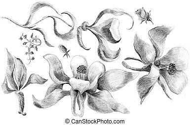 Flower sketch set - Flower sketch  set hand drawing