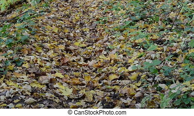 woman hill leaf autumn - woman climb hill on autumn colorful...