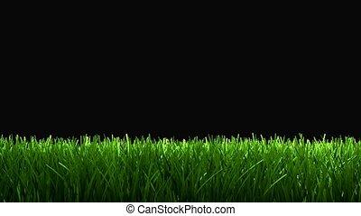 Grass lower 3rd.