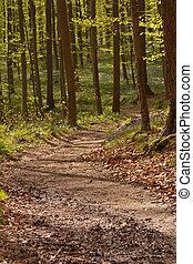 1, 路徑,  -, 森林