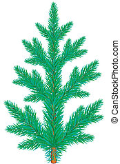 Spruce - Blue spruce tree on white background