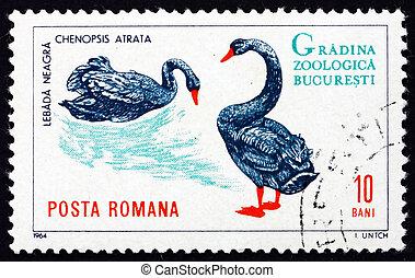 Postage stamp Romania 1964 Black Swans, Cygnus Atratus, Bird...