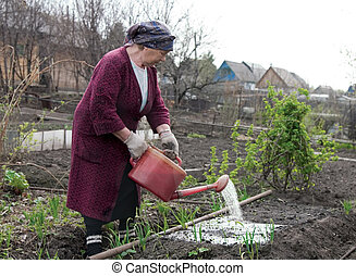 The gardener - The elderly woman waters a strawberry