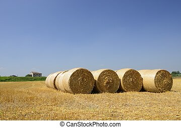 corn sheaves and stubbles, Polesine Parmense - landscape...