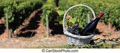 bottle of wine and grappes in basket in front of vineyard