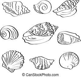 Set seashells, outline - Set different marine seashells,...