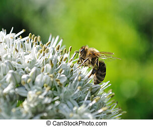 working bee and blooming onion in the vegetable garden