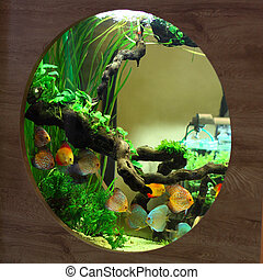 Tropical aquarium with colorful fish and green plants