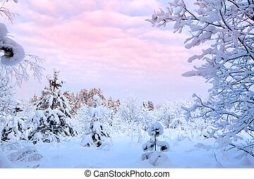 Winter landscape of snow-covered trees and firs