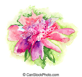Pink Peony flower, Watercolor painting