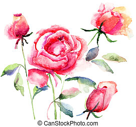 Rose flower, watercolor illustration