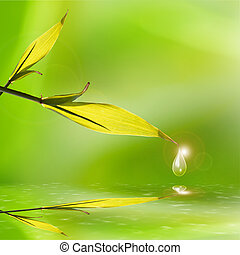 bamboo leaves reflection
