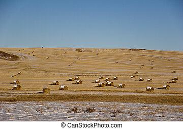 Rolls Of Hays On A Frozen Field