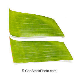 Banana leaves. - Banana leaves on a white background.