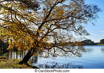 Talkin Tarn, Brampton, with overhanging tree - Beautiful...