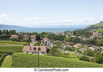 Houses amidst Vineyards - Houses amidst vineyards by Lake...