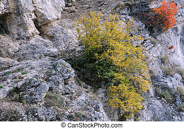 Plants in the Balkan Mountains