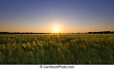 summer glow - sunset summer glow over rual field almost...