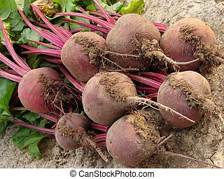 beetroot - some beetroot with tops on the ground...
