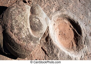 Fossilized dinosaur dung, AZ, US - Fossilized dinosaur dung...